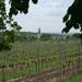 Tourisme viticole